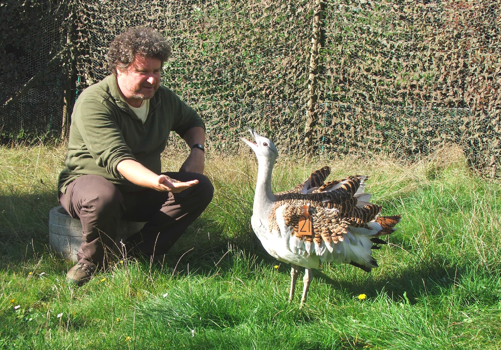 The Great Bustard Project